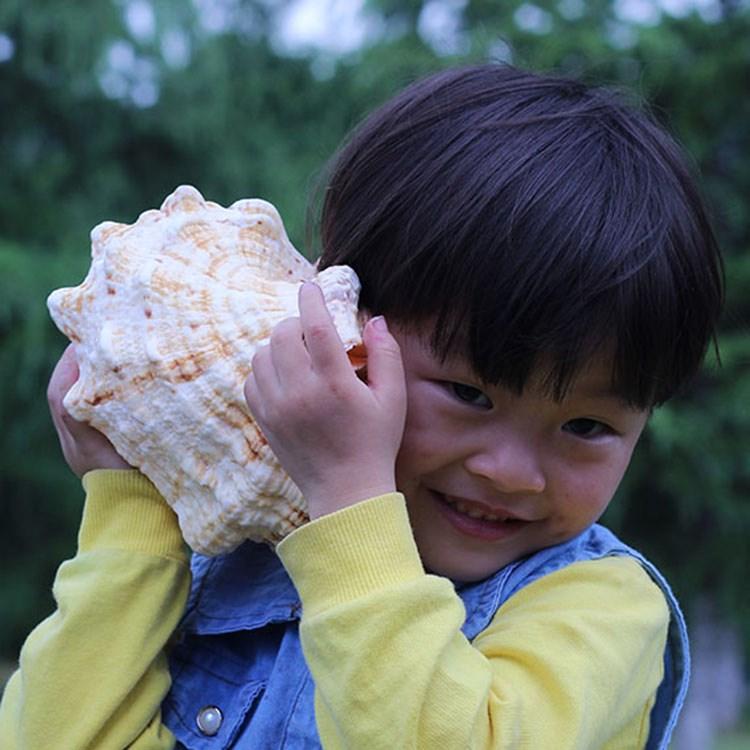 석 호 나선 천연 귀중한 말 개구리 나선 왕소라 조개 창의 소라딱지 어항 조경 장식품 장식품 재가하다