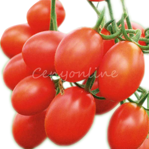 Best Promotion 30X Tomato Heirloom Seeds Delicious Tasty Fru