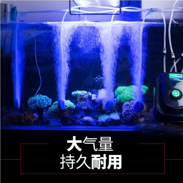 аквариум кислородом фунтов рыбоводства мини бар фунтов фунтов помочь бытовой кислорода кислорода кислорода - машина государства кислорода кислорода фунтов мочевого пузыря Чонг