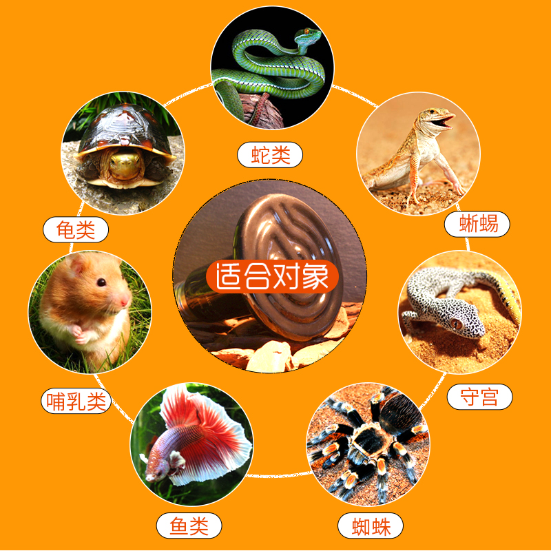 Climbing pet ceramic heating bulb reptile pet turtle tortoise lizard hedgehog infrared heating heating temperature control