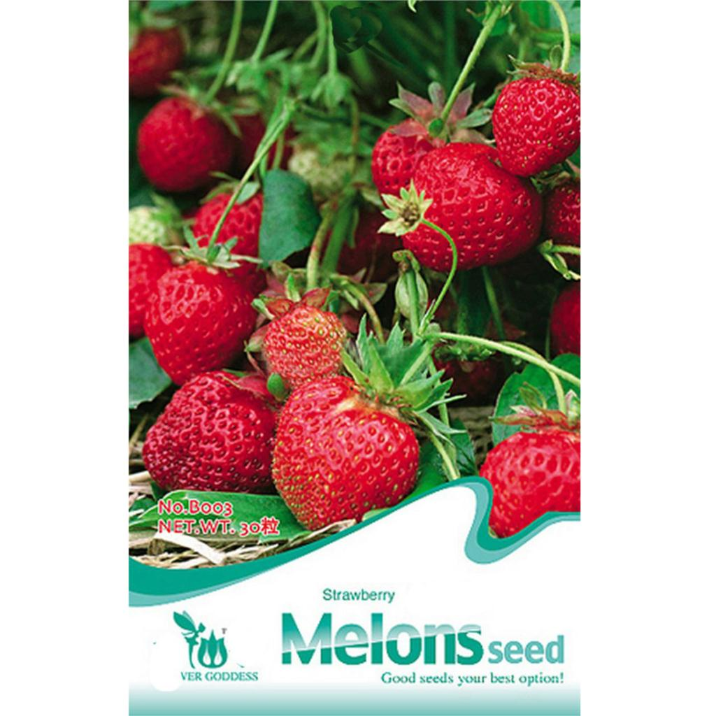 SZS Hot leading-star 30 Chinese Strawberry Seeds Delicious