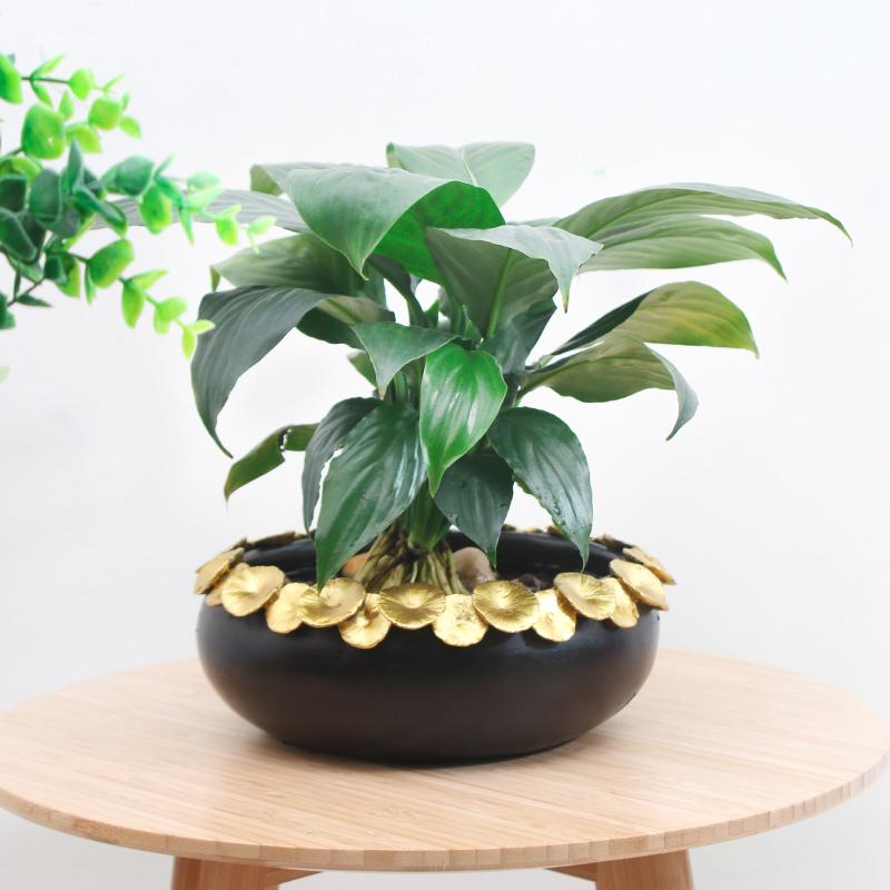錦年花盆系列-款一中創意歐式奢華水仙花花盆睡蓮碗蓮荷花銅錢草水培室內客廳桌面盆器