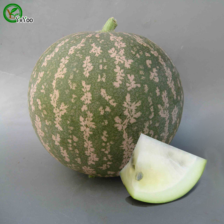 Watermelon Seeds Senior Courtyard Plants Delicious Fruit See