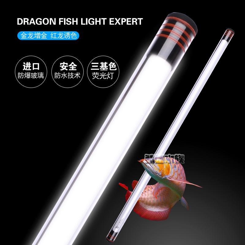 Aquarium de pêche scléropage Dragon Aquarium de lampes Jinlong dragon rouge des lampes d'éclairage de l'aquarium de lampe étanche