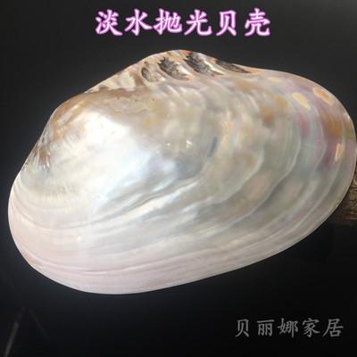 淡水贝壳天然抛光珍珠白色母贝家居工艺饰品摆件鱼缸造景创意果盘