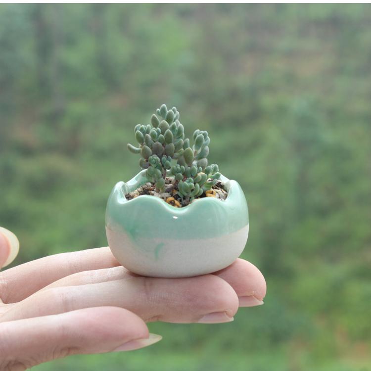 冰裂陶瓷迷你拇指多肉花盆-多肉花盆网