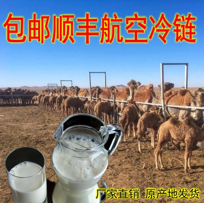 1000 g 2 jins of camel milk milk without sugar in xinjiang camel camel milk pure milk straight for the air motion of origin