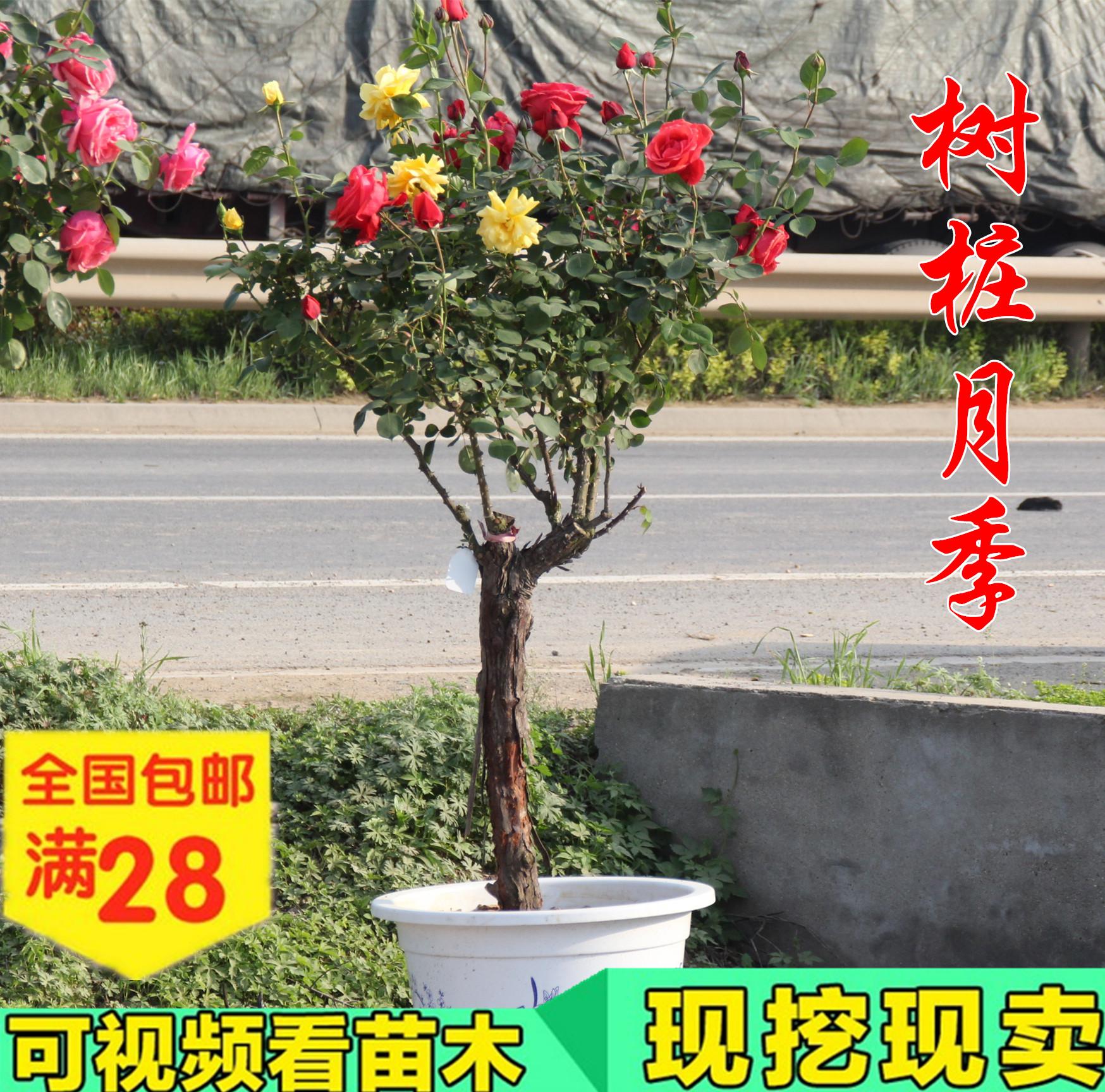 Купить рассаду цветов в интернет магазине недорого с доставкой