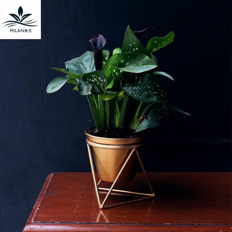 Milan rèn sắt thịt hoa nồi trang trí nội thất màu xanh lá cây trồng đơn giản màu xanh lá cây nước thủy canh bình hoa đứng