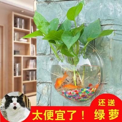 家居卧室挂饰墙壁墙上装饰品墙面挂壁花盆创意墙饰挂件壁挂鱼缸
