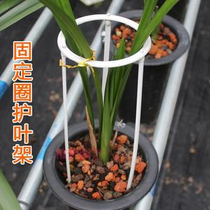Nguồn cung cấp vườn phong lan cố định hỗ trợ khung nhẫn bảo vệ hoa phong lan lá đặc biệt nhựa lá bracket